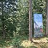 Wald_MMB5009