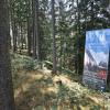 Wald_MMB5013